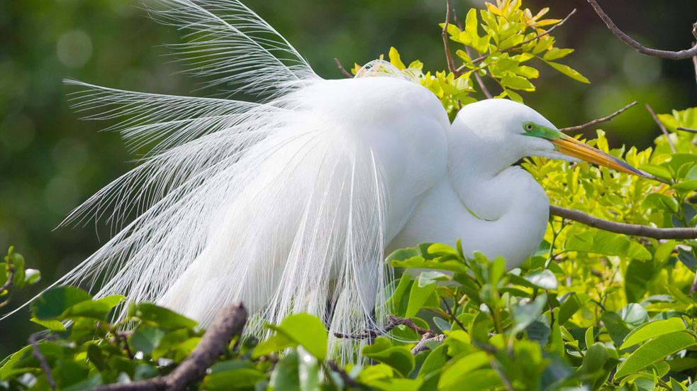 Národní park Everglades