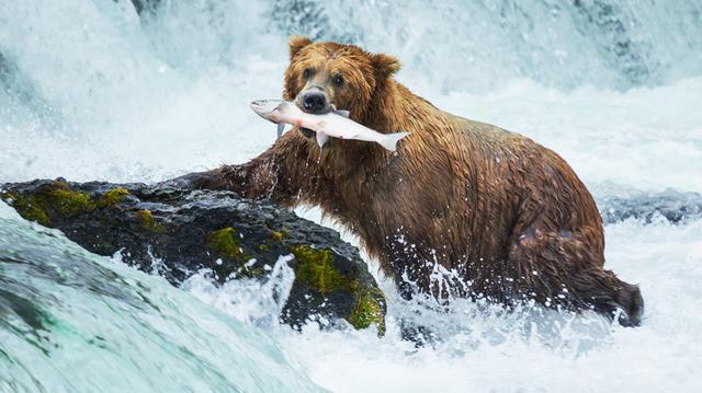 Divočina na Aljašce a Yukonu