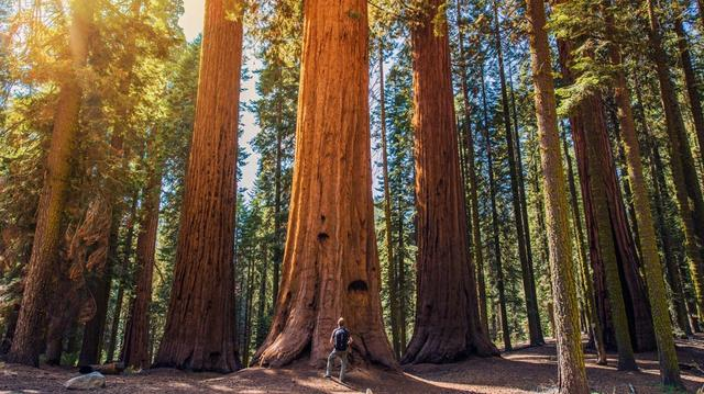 Národní park Sequoia a Kings Canyon